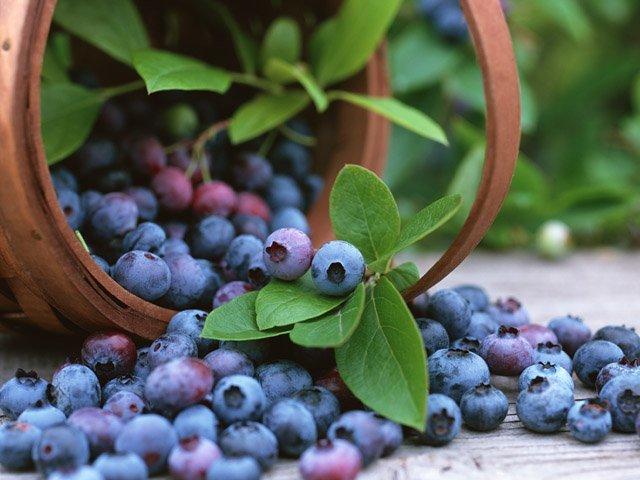 blueberry-cutiecutue5