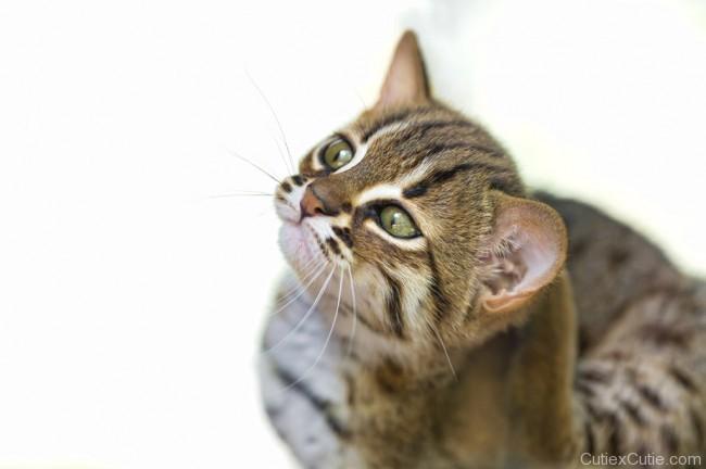 cat-cutiexcutie-01