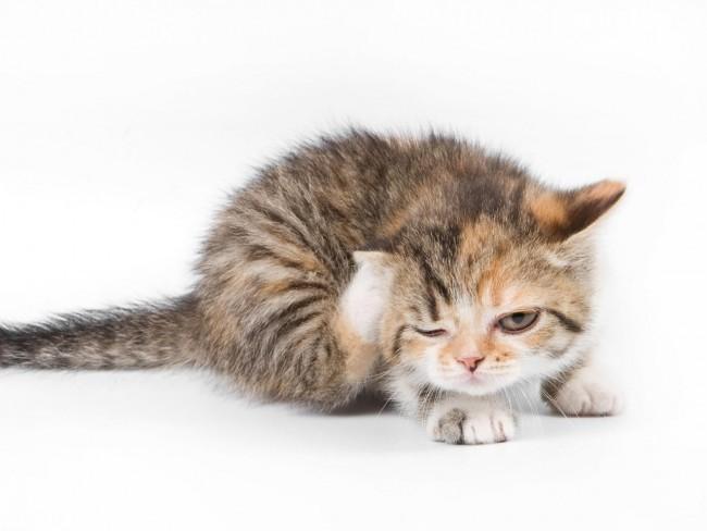 cat-cutiexcutie-02