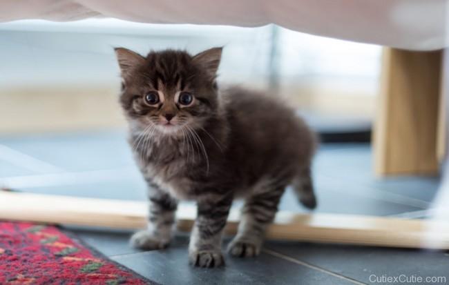cat-cutiexcutie-03
